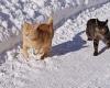 2-katzen-im-Schnee