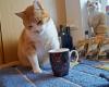 Ari-mit-neuem-Kaffeehäferl