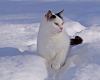 Baloo-im-Schnee