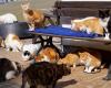Katzen-Futter