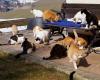 Katzen-Futter3