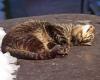 Katzenparadies-Katzn-56