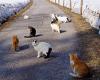 Katzenstraße