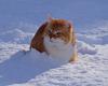 Peter-im-Schnee1