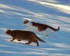 katzen-auf-der-Jagd