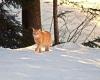 rotes-Katze-im-Paradies